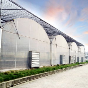 Commercial Film Greenhouse for Growing Flowers pictures & photos
