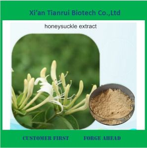 Chlorogenic Acid 95% Sources Honeysuchle Flowers Extract pictures & photos