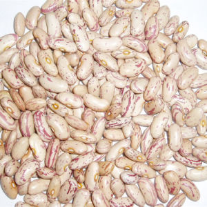 New Crop Long Shape Speckled Kidney Beans pictures & photos