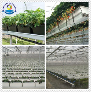 Greenhouse Agricultural Plant Trough pictures & photos