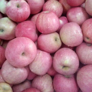 New Crop Good Quality of Red Qinguan Apple pictures & photos