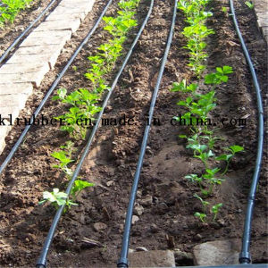 Black Drip Irrigation Pipe system Use in Farming pictures & photos