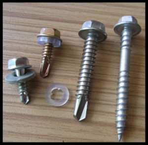 Stainless Steel Screw pictures & photos
