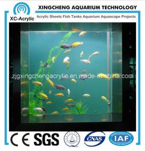 The Square Aquarium pictures & photos