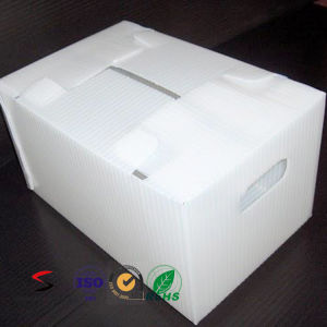 PP Polypropylene Fruit and Vegetable Plastic Coroplast Folding Box Manufacturer pictures & photos