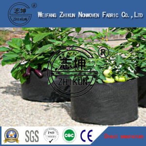 PP Non Woven for Plant Cover