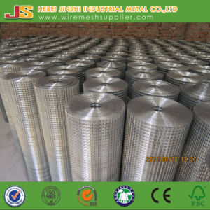 2-1/2 Inch Galvanized Welded Mesh Made in China pictures & photos
