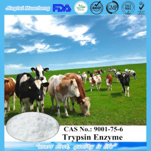 Best Quality Medical Grade Trypsin Enzyme CAS No.: 9001-75-6 pictures & photos