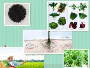 Compound Granular Organic Micro Water Soluble NPK 4-3-1 Base Fertilizer pictures & photos
