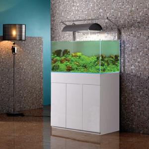 Aquarium Glass Fish Plant Tank