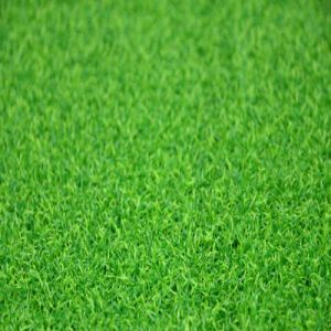 Best Quality Artificial Grass for Sports Golf (GFN) pictures & photos