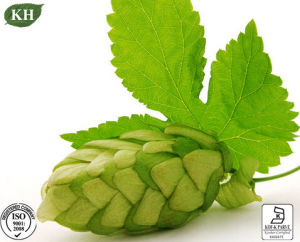 Reliable Supplier Hops Extract 4: 1 10: 1 4% Flavonoids UV pictures & photos