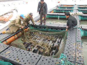 HDPE Deep Sea Culture Tilapia Cage pictures & photos