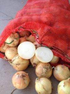2015 New White Onion pictures & photos