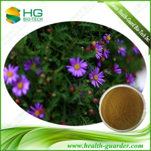 Echinacea Purpurea Extract Purple Daisy Powder
