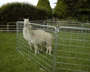 Hot Sale Galvanized Sheep Wire Mesh Portable Fence Panel/Corral Panel/Alpaca Panel (factory) pictures & photos