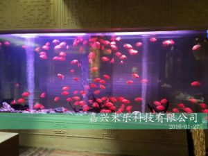 Acrylic Aquarium Tank for Artificial Fish pictures & photos