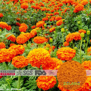 Marigold Extract 10% Lutein Beadlets for Tablet pictures & photos
