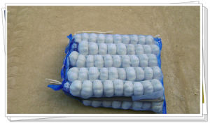 Fresh Garlic Packing in Mesh Bag pictures & photos