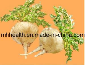 Macamide 40% /Natural Maca Extract pictures & photos