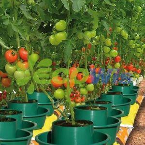 China Manufacturer Tomato Grow Bag Pots pictures & photos