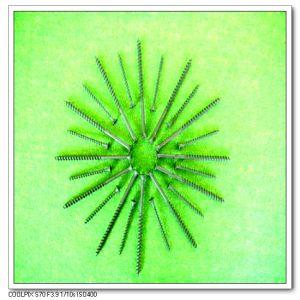 Coarse Thread Drywall Screws (3.5*25)