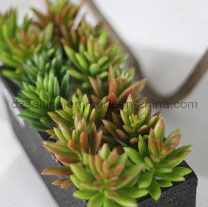 Decorative Plant Natural Touch Artificial Succulents Artificial Flower (SW17672)