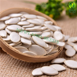 Fresh and Dried Snow White Pumpkin Seeds in China pictures & photos