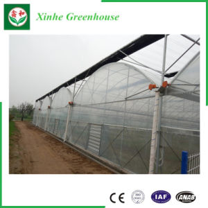 Muti Span Plastic Poly Greenhouse PC Greenhouse for Vegetable Planting pictures & photos