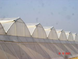 Anti-Insect Net 120GSM 50mesh with UV pictures & photos