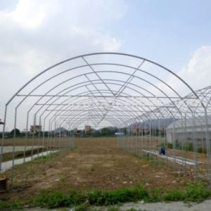The Best Used Small Tunnel Film Greenhouse for Sale pictures & photos