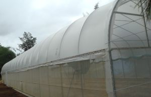 Virgin HDPE Agriculture Greenhouse Anti Insect Netting pictures & photos
