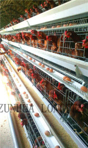 a Type of Automatic Chicken Cage