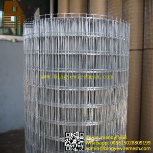 Heavy Hot-Dipped Galvanized Welded Wire Mesh pictures & photos