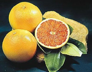 Orange Lemon Extract Limonin 30% 90% 98% pictures & photos