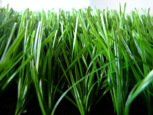 High Quiality Soccer Turf with S Shape Yarn (MT-S1-50A) pictures & photos