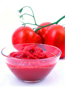 Tomato Paste Good Price 28-30%