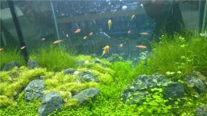 Lobby Displayed Designed Gallon Aquarium Fish Tank pictures & photos