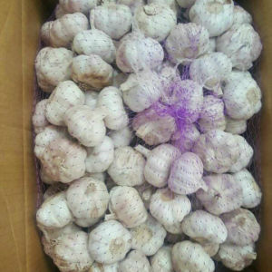 Fresh White Garlic with Loose Packing pictures & photos