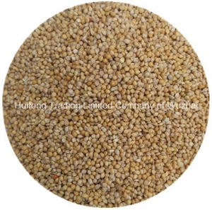 High Quality Millet in Husk