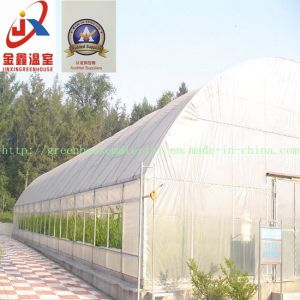 Agricultural Practical Plastic Fim Greenhouse pictures & photos