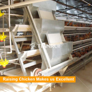 Automatic Feeding System for Poultry Layer Chicken Equipment pictures & photos