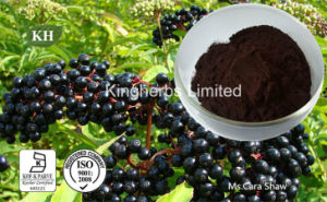 Elderberry Extract Anthocyanidins 3% to 25% by UV; 4: 1; 10: 1 pictures & photos