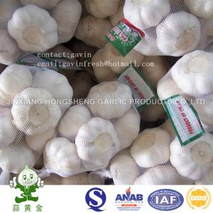 Chinese Fresh Pure White Garlic with Low Price