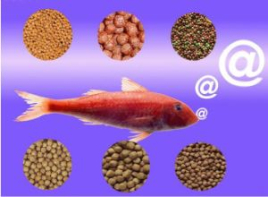 Factory Selling Sinking Shrimp Prawn Aquatic Floating Fish Feed Pellet Machine pictures & photos