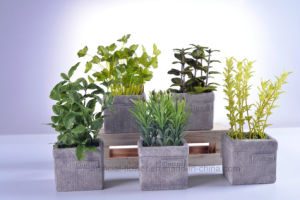 Beautiful Bonsai Simulation Herbs Plants in Cement Pot