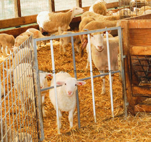 Galvanized Lamb/Kid-Proof Portable Gate Lamb Fence Panel with Mesh pictures & photos