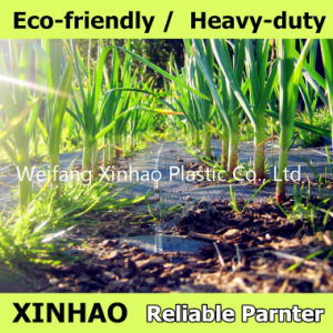 PP Woven Ground Cover Fabric pictures & photos