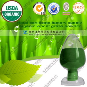 Halal Certificate Factory Supply Organic Wheat Grass Powder