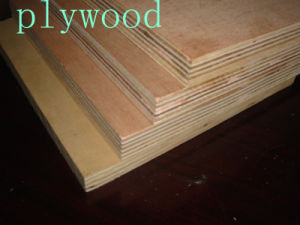 Plywood Wall Panel / Container Plywood (1220*2440)